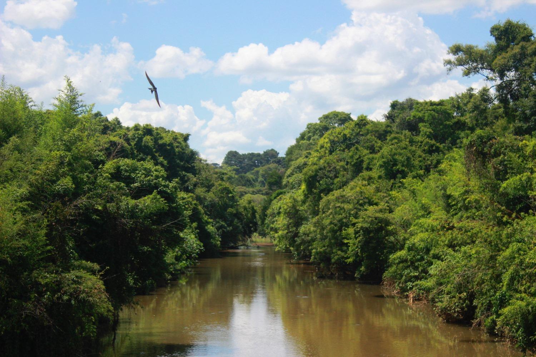 Maisema, jossa joen rannoilla kasvaa reheviä puita. Lintu lentää taivaalla.
